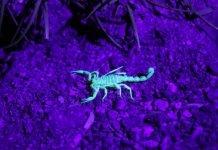 Fotografia ultravioletta