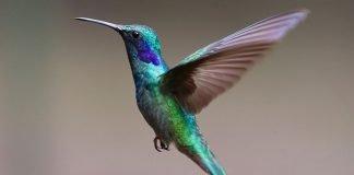 Consigli su come fotografare gli uccelli